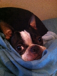 Pet Photo Swap